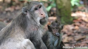 Sange Monkey Forest in Bali