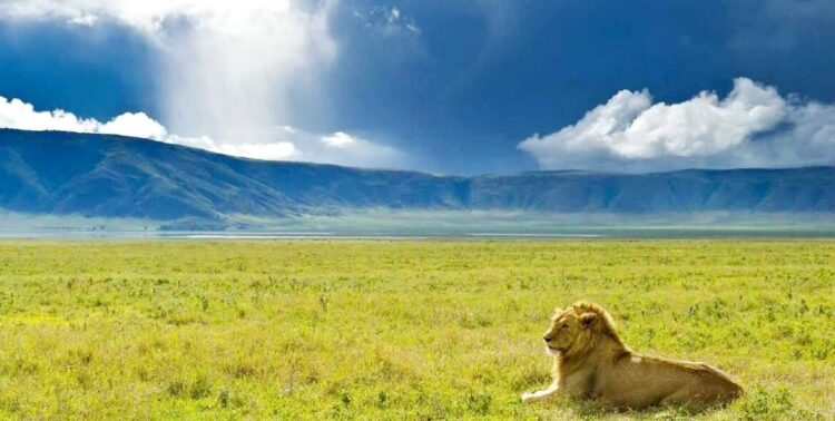 Кальдера Нгоронгоро (Ngorongoro Conservation Area)